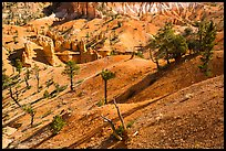 Eroded slopes and pines. Bryce Canyon National Park ( color)