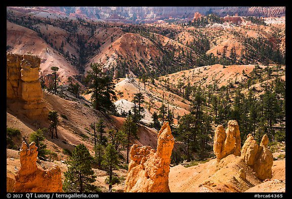 Hoodoos, eroded slopes with evergreens. Bryce Canyon National Park (color)