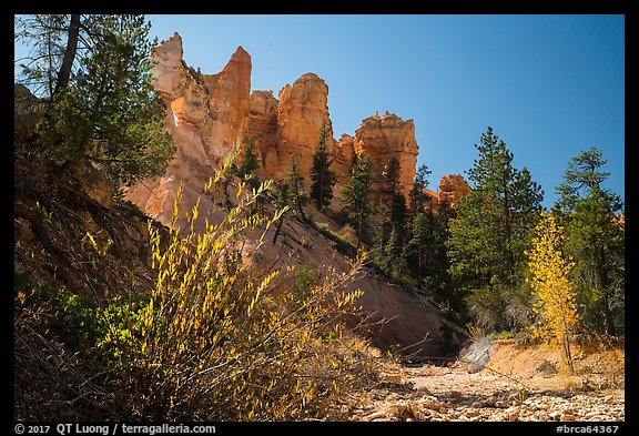 Dry creek with autumn foliage and hoodoos. Bryce Canyon National Park (color)