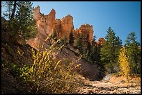 Dry creek with autumn foliage and hoodoos. Bryce Canyon National Park, Utah, USA.