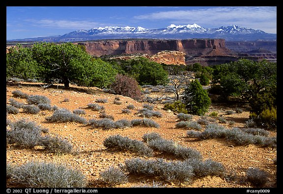 View with canyons and mountains, the Needles. Canyonlands National Park (color)