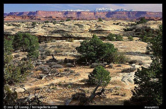 View with bare limestone table, canyons and mountains, the Needles. Canyonlands National Park (color)