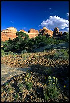 Wildflowers and sandstone towers near Elephant Hill, the Needles, late afternoon. Canyonlands National Park ( color)