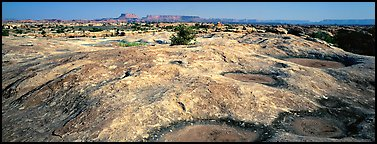 Potholed sandstone slab, Needles District. Canyonlands National Park (Panoramic color)