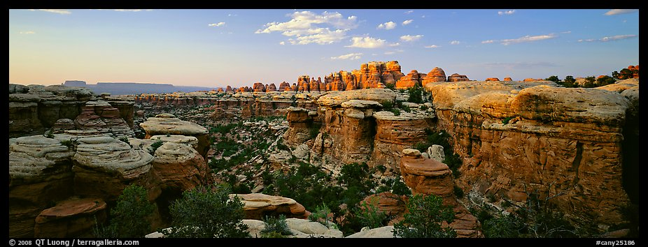 Sandstone Needles in the glow of last light, Needles District. Canyonlands National Park (color)
