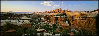 Sandstone Needles in the glow of last light, Needles District. Canyonlands National Park (Panoramic color)