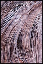 Close-up of juniper bark. Canyonlands National Park ( color)
