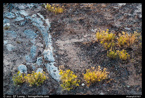 Rocks, soil, and desert flowers. Canyonlands National Park (color)