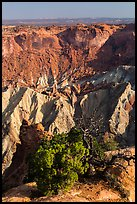 Juniper and Upheaval Dome. Canyonlands National Park ( color)