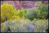 Autumn color in Horseshoe Canyon. Canyonlands National Park, Utah, USA.