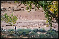 Park visitor looking, the Great Gallery,  Horseshoe Canyon. Canyonlands National Park, Utah, USA. (color)