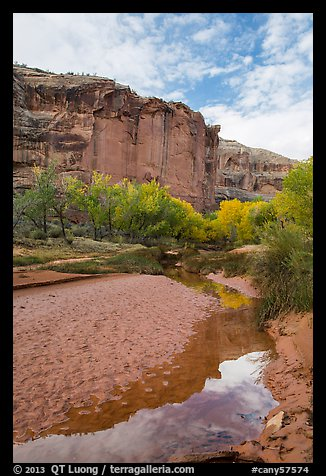 Creek, cottonwood trees in fall foliage, and cliffs, Horseshoe Canyon. Canyonlands National Park (color)