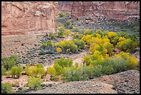 Horseshoe Canyon in autumn. Canyonlands National Park, Utah, USA. (color)