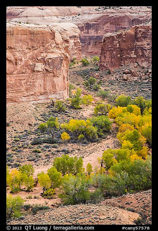 Horseshoe Canyon from the rim in autumn. Canyonlands National Park (color)