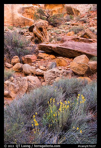 Wildflowers and rocks, the Maze. Canyonlands National Park (color)