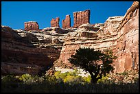 Trees below the Chocolate Drops, Maze District. Canyonlands National Park, Utah, USA. (color)