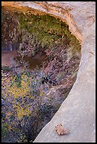 Alcove with pool and hanging vegetation, Maze District. Canyonlands National Park, Utah, USA. (color)