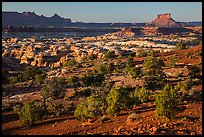 Maze seen from Chimney Rock, late afternoon. Canyonlands National Park, Utah, USA. (color)