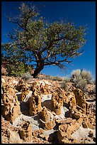 Concretions and tree, Orange Cliffs Unit, Glen Canyon National Recreation Area, Utah. USA (color)