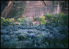 Sagebrush, trees, and cliffs with desert varnish at dusk. Capitol Reef National Park, Utah, USA.