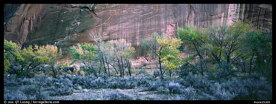 Sagebrush, trees and cliffs with desert varnish. Capitol Reef National Park (color)