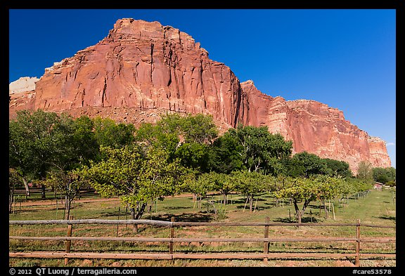 Fruita orchard and cliffs in summer. Capitol Reef National Park (color)