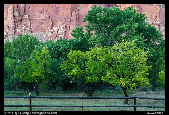 Fruit trees in historic orchard and red cliffs. Capitol Reef National Park (color)