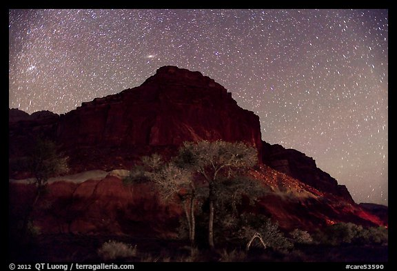 Trees and cliff by night. Capitol Reef National Park (color)