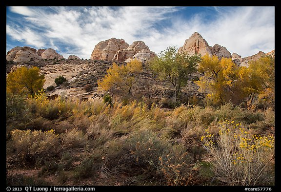 Srubs and trees in autum under white sandstone domes. Capitol Reef National Park (color)