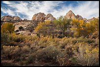 Srubs and trees in autum under white sandstone domes. Capitol Reef National Park, Utah, USA. (color)
