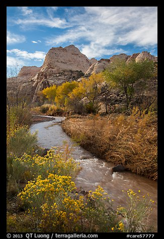 Fremont River, shrubs and trees in fall. Capitol Reef National Park (color)