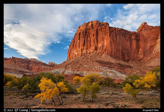 Cliffs towering above Fruita trees in autumn, sunset. Capitol Reef National Park (color)