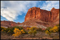 Cliffs towering above Fruita trees in autumn, sunset. Capitol Reef National Park, Utah, USA.