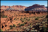 Junipers and Mummy cliffs. Capitol Reef National Park ( color)