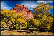 Fruita orchard and cliff in autumn. Capitol Reef National Park, Utah, USA.