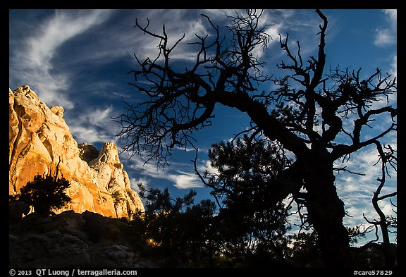 Silhouetted juniper and cliff. Capitol Reef National Park (color)