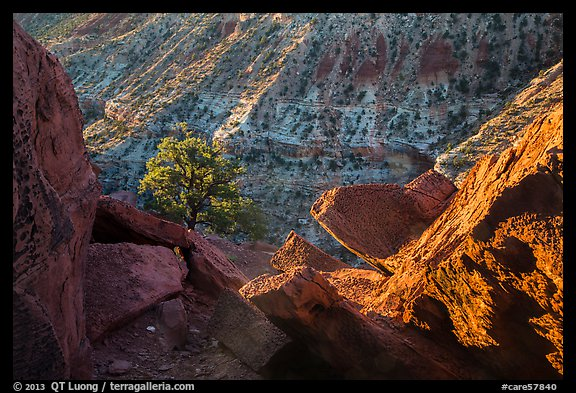 Juniper and cliffs on rim of Sulfur Creek Canyon. Capitol Reef National Park (color)