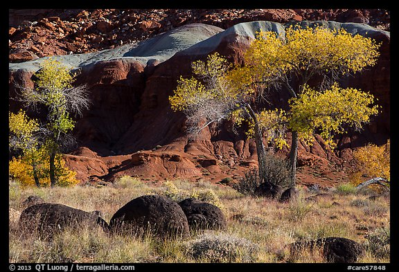 Basalt boulders, Cottonwoods in autumn, cliffs. Capitol Reef National Park (color)