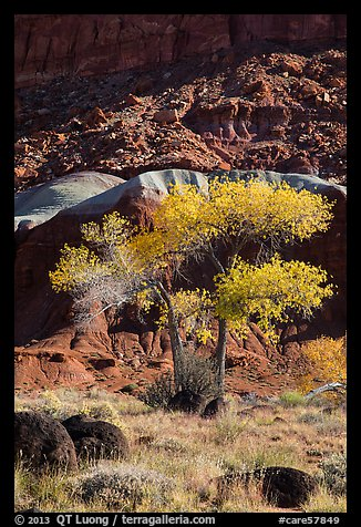 Basalt boulders, Cottonwoods in fall, cliff base. Capitol Reef National Park (color)