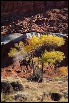 Basalt boulders, Cottonwoods in fall, cliff base. Capitol Reef National Park, Utah, USA.
