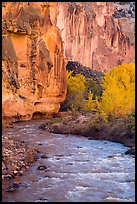 Bend of the Fremont River, cottonwoods, and cliffs in autumn. Capitol Reef National Park, Utah, USA.