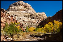 Capitol Dome in autumn. Capitol Reef National Park, Utah, USA. (color)