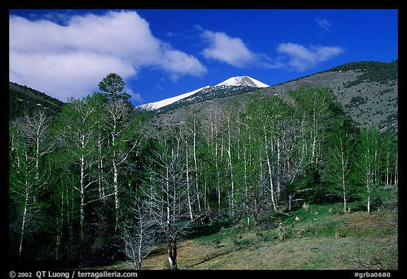 Trees and mountains, Baker Creek, morning spring. Great Basin National Park (color)