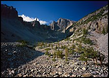 Bristlecone pine and morainic rocks, Wheeler Peak, morning. Great Basin National Park, Nevada, USA.
