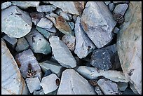 Ground close-up with quartzite blocks and bristlecone pine cones. Great Basin National Park ( color)