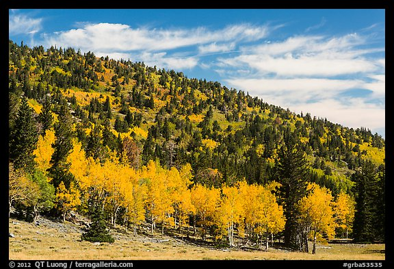 Mixed forest in autumn foliage. Great Basin National Park (color)