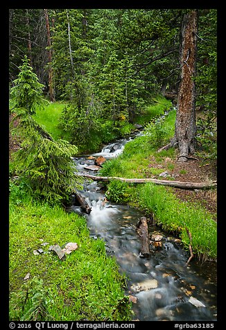 Verdant Snake Creek in summer. Great Basin National Park (color)