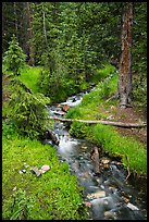 Verdant Snake Creek in summer. Great Basin National Park ( color)