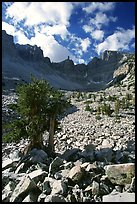 Bristlecone pine and rocks cirque, Wheeler Peak, morning. Great Basin National Park, Nevada, USA. (color)