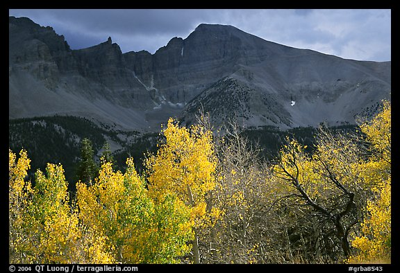Aspens in fall foliage and Wheeler Peak. Great Basin National Park (color)